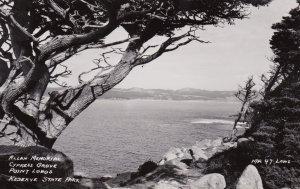 California Point Lobos Cypress Grove Real Photo