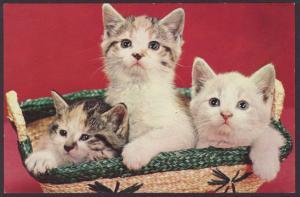 Three Kittens in a Basket Postcard