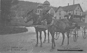 Horse Drawn Pair of One Year Olds FA Burdick Unused