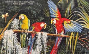 USA Florida Miami Beautiful Macaws Parrot Jungle Red Road