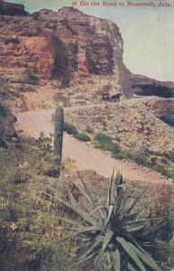 Arizona Cactus Desert Scene With Cactus
