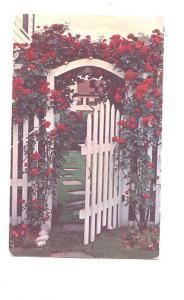 The Paul's Scarlet Climbing Rose, Iowa,  Used Logan 1955