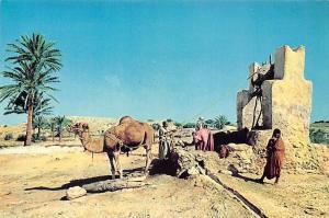 Tunisia Jerba Fountain Un Puits Eine Brunnen Camel