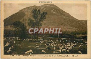 Old Postcard Auvergne Grazing sheep at the foot of the Puy de Dome