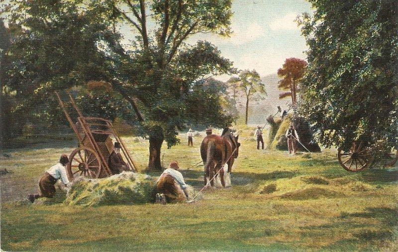 Heymaking Scene. Horses Nice old vintage  English postcard