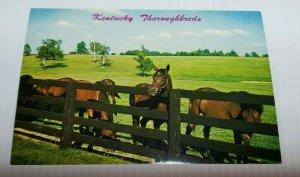 Vintage Postcard Kentucky Thoroughbred horses Paris Lexington Blue Grass 1988