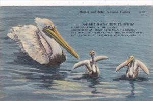 Florida Greetings With Mother and Baby Pelicans