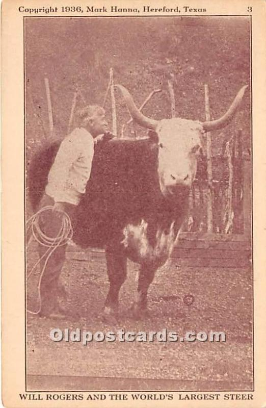 Will Rogers and the World's Largest Steer 1936 Mark Hanna, Hereford, Tex...