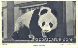 Bear Postcard Bear Post Card Old Vintage Antique
