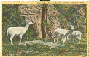 White Fallow Deer in Rock City Gardens, Lookout Mountain,...