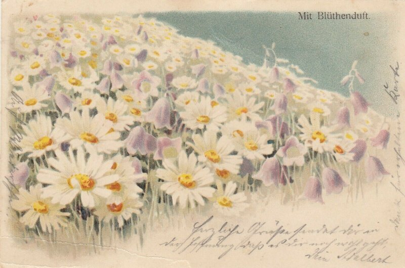 Daisy Flowers , 1905