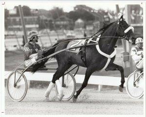WINDSOR RACEWAY Harness Horse Race , ARMBRO ACADIUM winner, 1981