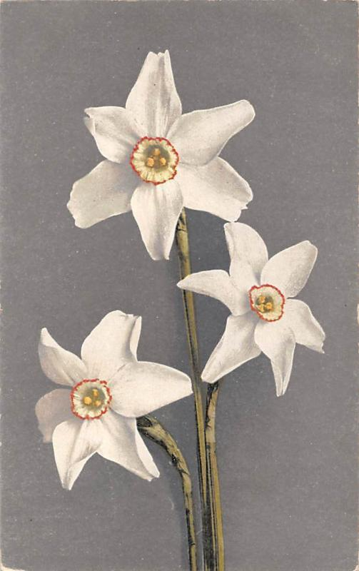Beautiful White Narcissus Flowers Bouquet, made in Switzerland