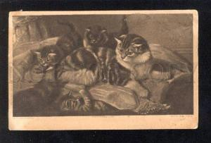 034078 PUSSY CAT plays w/ KITTENS. By COULDERY old