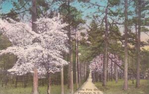 North Carolina Pinehurst In the Pine Grove Albertype