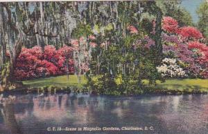 South Carolina Charlestton Scene In Magnolia Gardens 1948