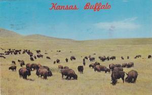 Buffalo / Bison herd , Kansas , 40-60s