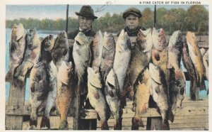 A Fine Catch of Fish , Florida , 1910s