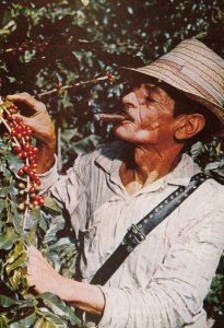 COLOMBIA,  1950-70s ; Coffee Bean Harvest