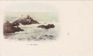 Seal Rocks, SAN FRANCISCO, California, 1898