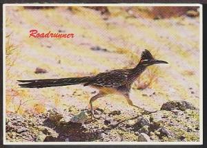 Road Runner Postcard BIN