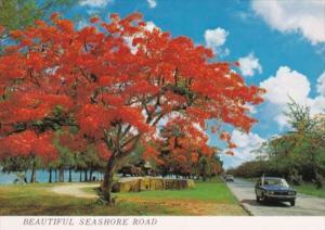 Saipan Beautiful Seashore Road