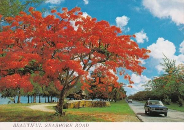 Saipan Beautiful Seashore Road