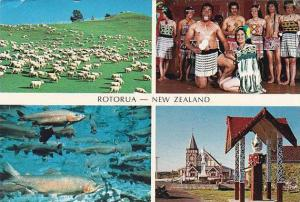 New Zealand Rotorua Multi View