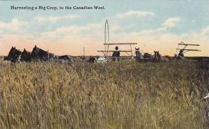 Horses, Harvesting a Big Crop, in the Canadian West, Canada, 00-10s