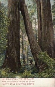 SANTA CRUZ , California , 1900-10s ; Big Tree Grove, California Wonderland