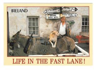Ireland Life in the Fast Lane Mule John Hinde Postcard 4X6