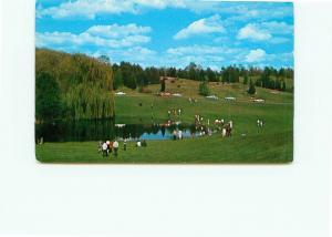 Postcard  Michigan Tipton Michigan state University Hidden Lake Gardens  # 4559A