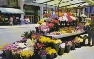 California San Francisco Sidewalk Flower Vendors