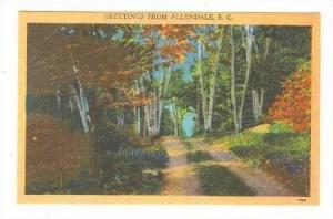 Woods Scene, Greetings From Allendale, South Carolina, 1900-1910s
