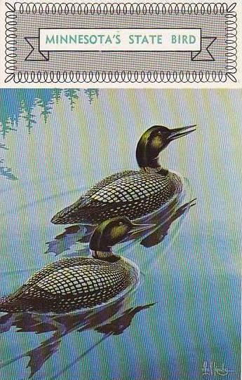 Minnesota State Bird The Loon
