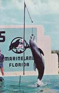 Jumping Porpoise Splash Raises The Flag Marine Studios Marineland Florida