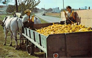 Amish Country Brothers Wagon of Corn Gettysburg PA Unused Chrome Postcard