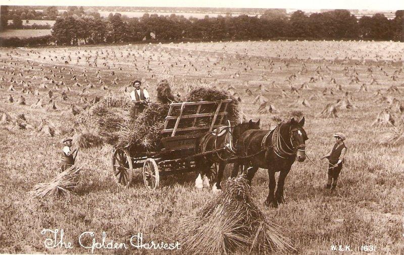 Horse cart The Golden Harvest Old vintage English postcard
