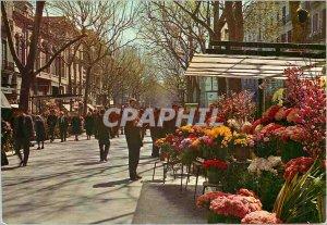 Postcard Modern Barcelona Flowers Rambla