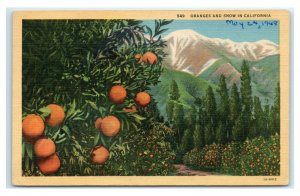 Postcard Oranges and Snow in California linen 1948 C75