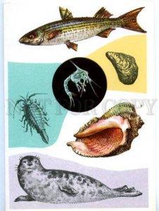d152628 South Seas Mugil Fish Rapana Caspian seals Old Rus PC