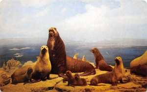 Seals Fur Seal, Pribilof Island Bering Sea Unused