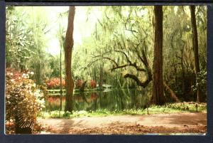 Magnolia Gardens,Near Charleston,SC BIN