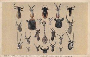 SAN ANTONIO Texas 00-10; African Animals Heads & Horns, Albert's Buckhorn Saloon