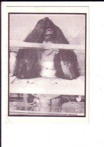 Free Debbie, Chimpanzee, Campaign Postcard, University of London, Ontario