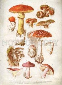 230768 1888 BEM Boehm mushrooms Book with 8 Lithographs
