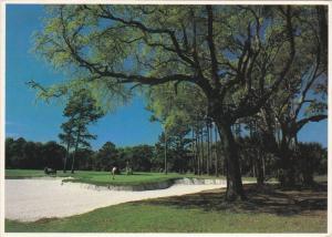 Golf Course ,Hilton Head , South Carolina , PU-1984 ; Hole #13