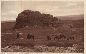 Dartmoor Ponies at Haytor Rocks, Devon, England, United Kingdom, 10-20s