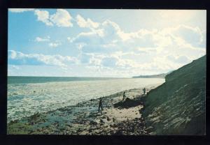 Martha's Vineyard, MA Postcard, Rocky Beach Scene/Cape Cod