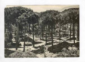 RP, Pineta, Porto d'Ischia (Naples), Campania, Italy, 1920-40s